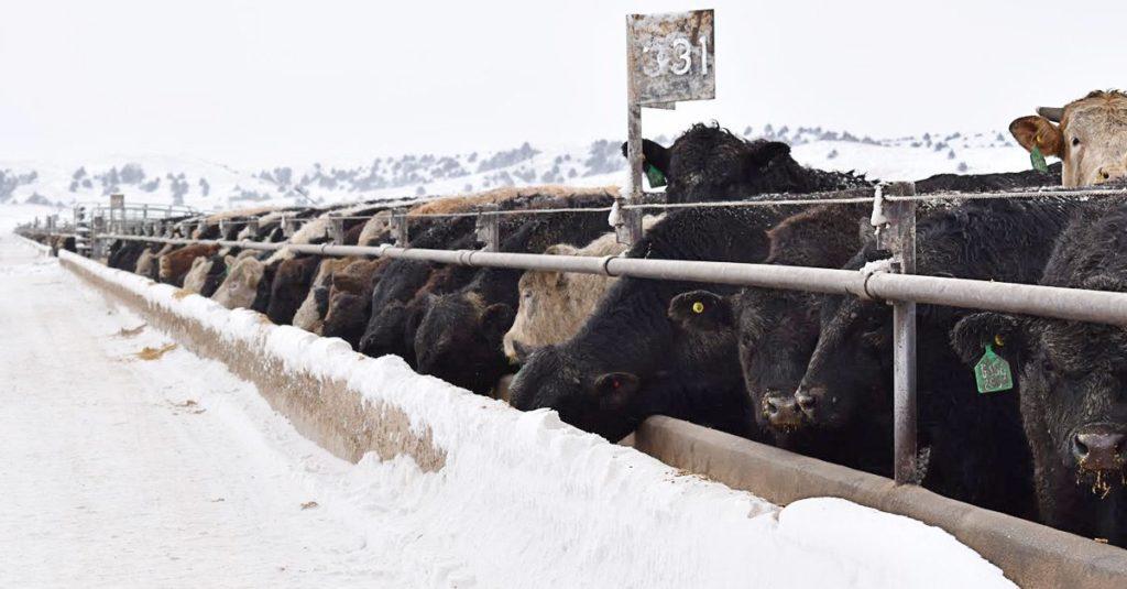 Crisis-intervention is an important duty of internal communications at Nebraska's Adams Land & Cattle.